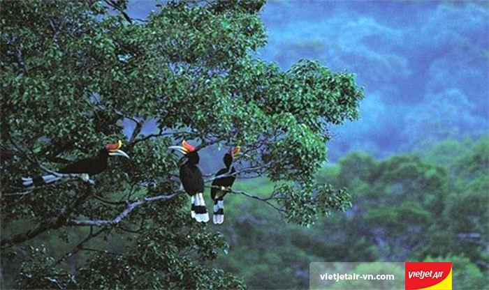 khu bảo tồn rừng nguyên sinh Phú Quốc