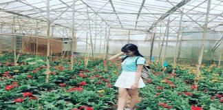 Làng hoa Vạn Thành - Điểm đến miến phí tại Đà Lạt