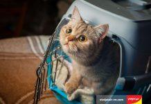 Vận chuyển vật nuôi trên máy bay